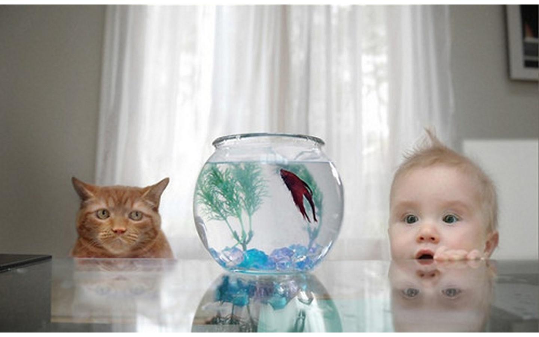 Надписями добрым, рыбка в аквариуме смешные картинки