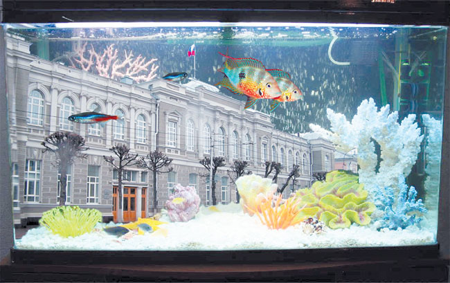 Губернаторский аквариум скоро почистят 22(39)